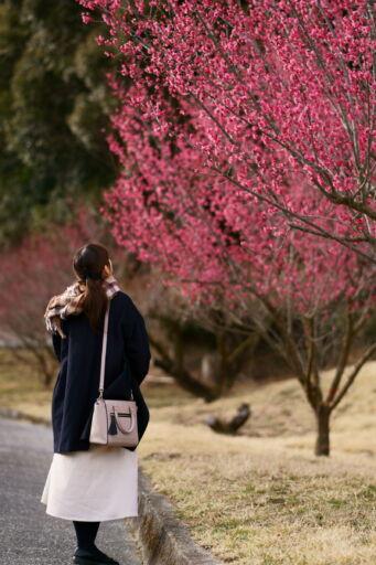 The featured image of 開花直後の豊岡梅園に行ってきました【2018年2月17日の開花状況:まだ蕾多数】【3月3日にまた行く予定です→満開でした!】