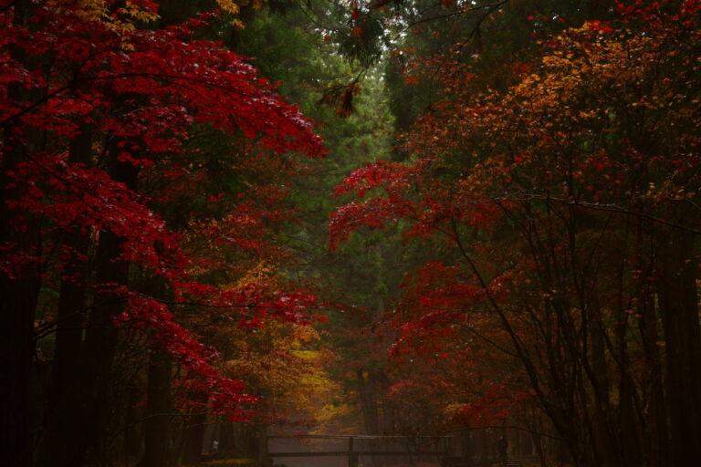 The featured image of 小國神社の紅葉が見頃です!現地レポート!【2018年】